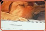 stampa foto calendario